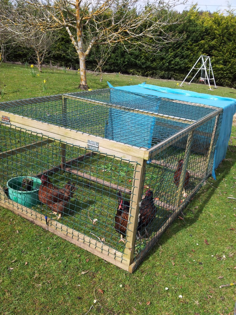 One end of this design opens up so I can access the water bowl. I just throw food in the top. The chickens live mainly on food waste from our kitchen, and rarely need bought food.