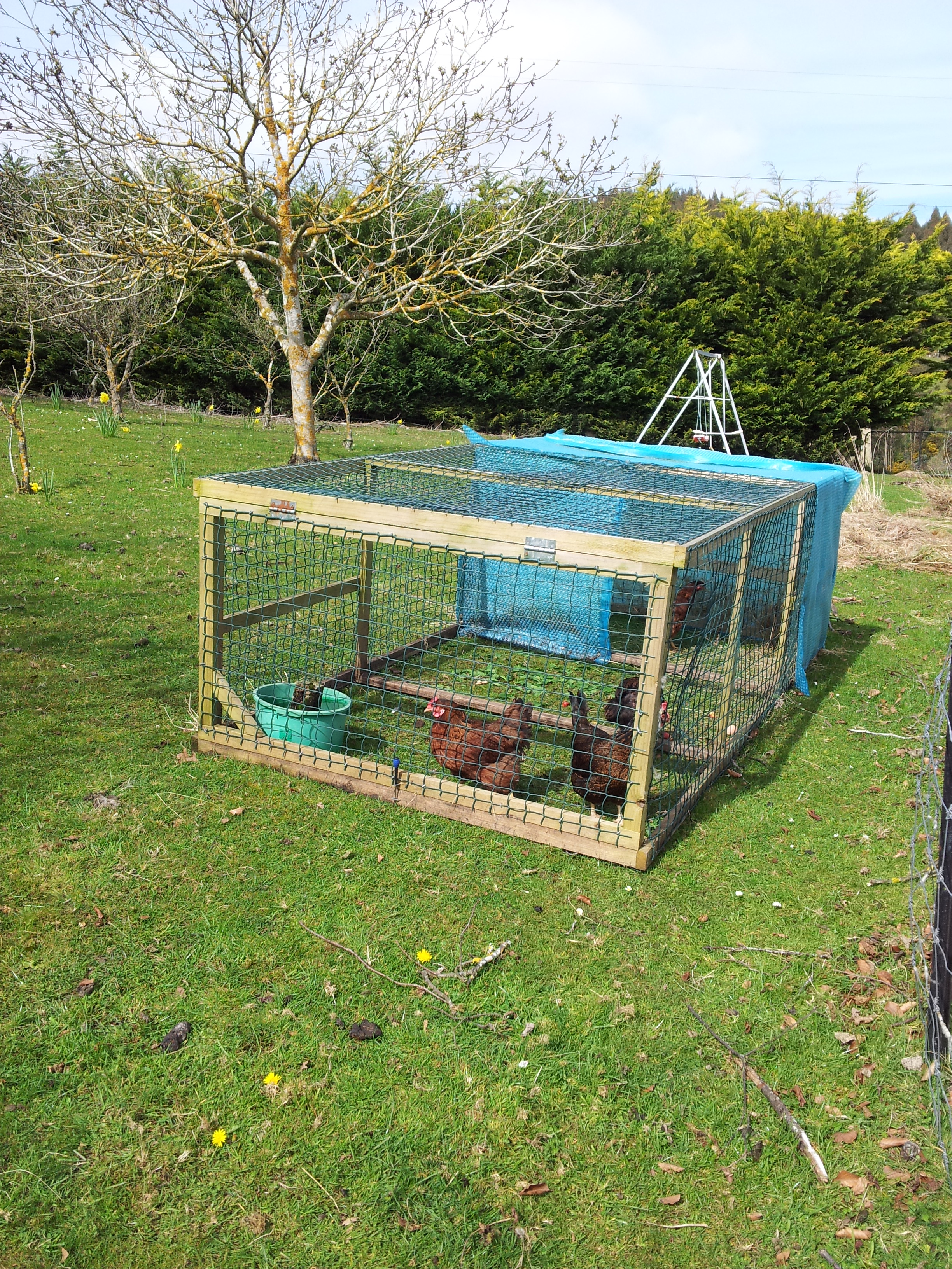 chicken tractor simple living with kids