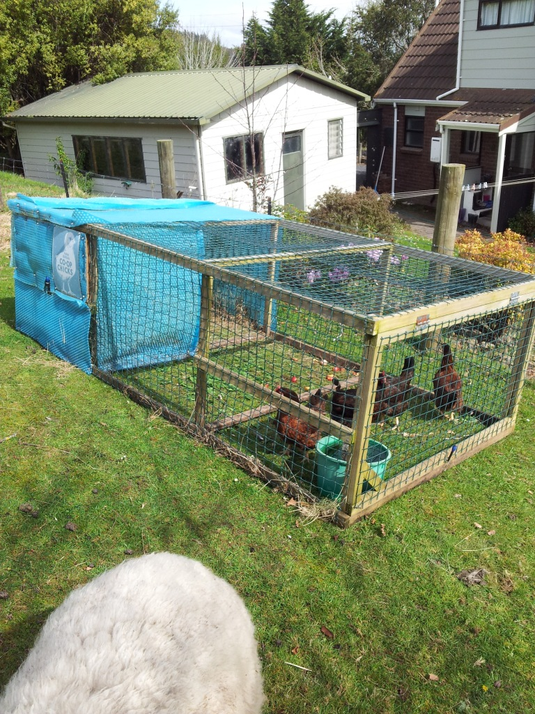 You can see the egg hatch in this photo. The shelter end of the tractor is made from recycled swimming pool cover. The tractor has no mesh on the bottom so the chooks can graze freely.