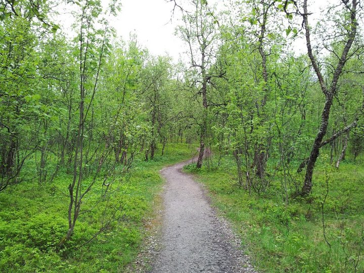 Tromso Botanic Gardens, Tromso, Norway.