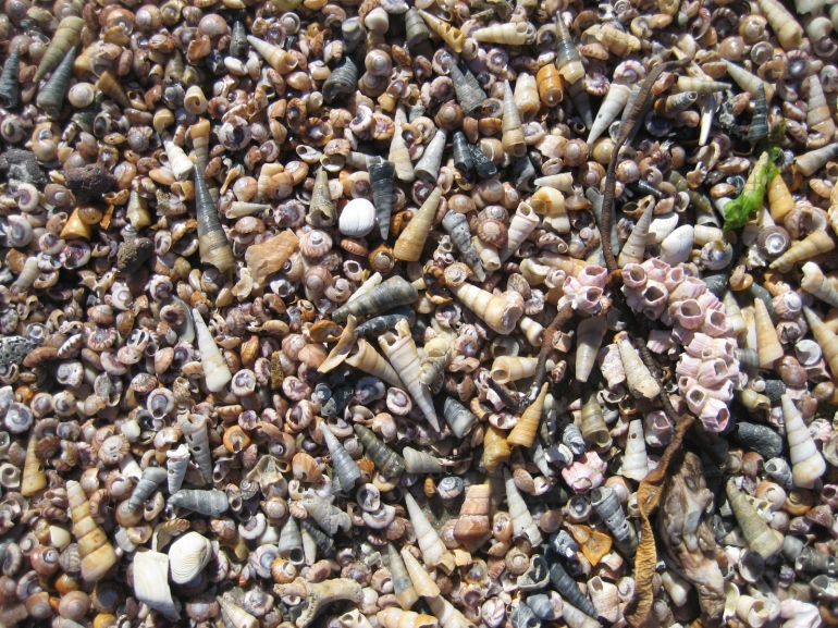 The beach is made up of countless tiny shells...