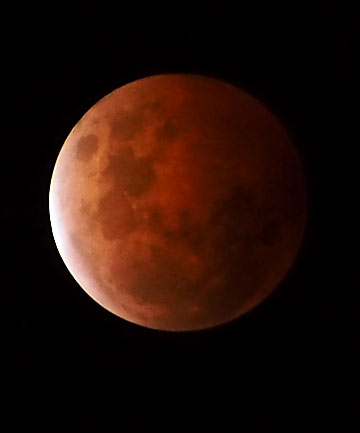 A beautiful photo of the blood moon as seen in Dunedin. Photo by Paul Gee (I'm not that good a photographer!)