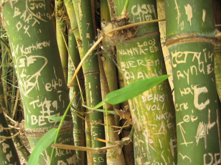 Bamboo in the Adelaide (Australia) Botanic Gardens. My name is carved somewhere near the top now, if it's even still there. I carved it as a teenager, many years ago. Life is change. Accepting this universal truth leads to happiness.