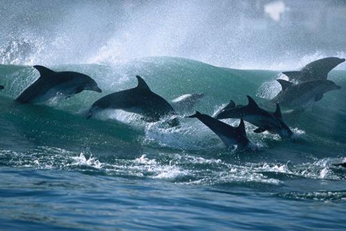 wilddolphins