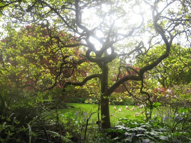 10_10_2009_treeazaleagarden