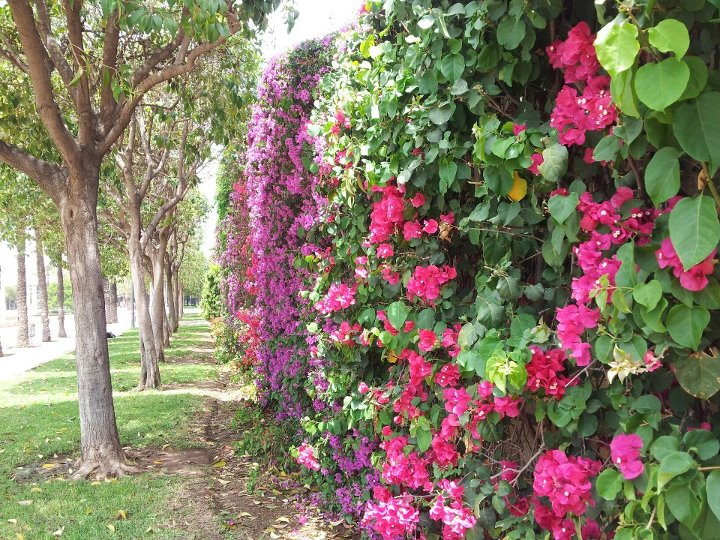Jardin del Turia, Valencia, Spain. Walking a city can help you find unexpected beauty - and wonderful memories.