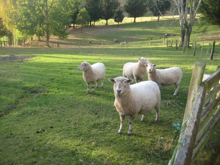 I'll be saying goodbye to my sheep. I'll miss the rural life. But life changes sometimes.