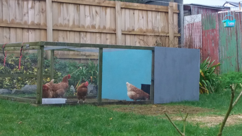 chicken tractor with chickens
